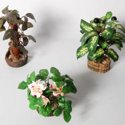 Models- Plants - Montessori Materials
